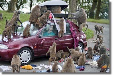 """A Congress of Baboons"""